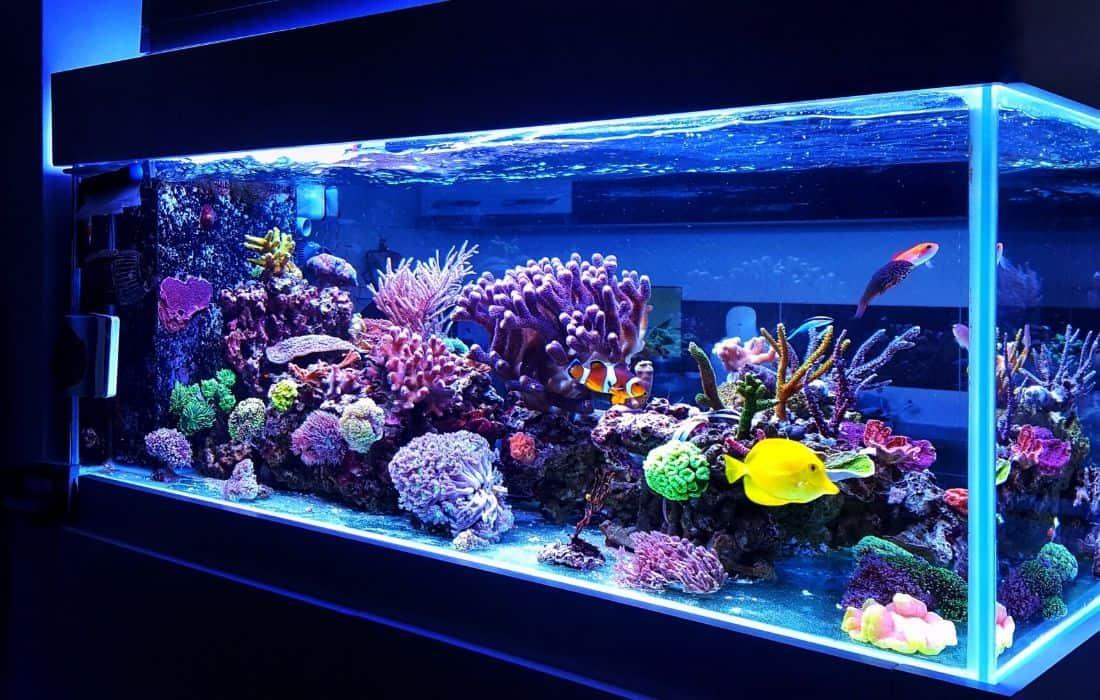 Acquario in casa quale scegliere e dove acquistarlo