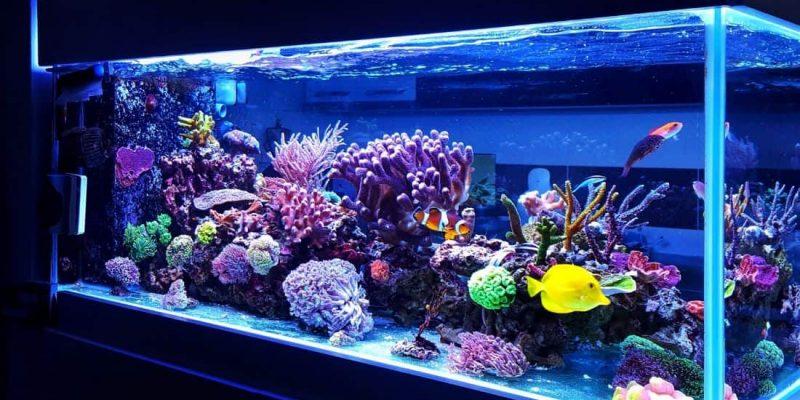 Quale acquario scegliere per la tua casa